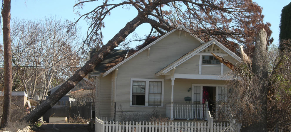 Oak Park Emergency Tree Removal