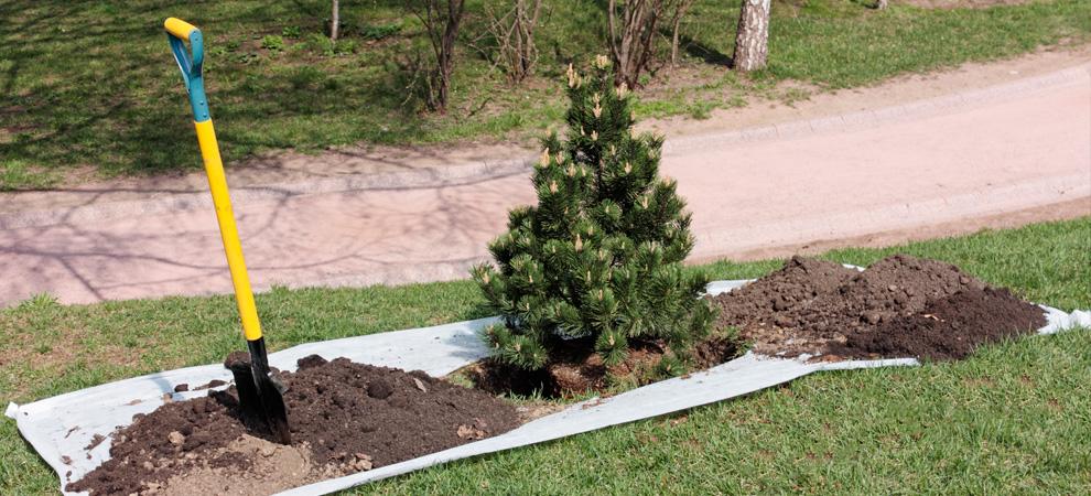 Oak Park Tree Planting