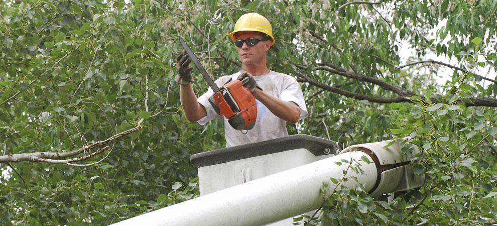 Oak Park Tree Service